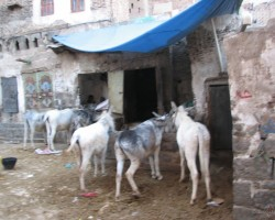 Jemena un Sokotras sala. 02.2014