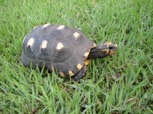 <span class=&quot;f15 lh1p5&quot;>Bruņurupucis</span>