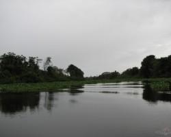 upe Vjetnamā