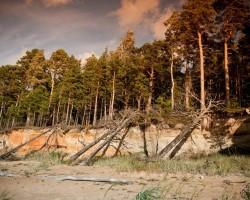 Meži manām acīm - 3. foto