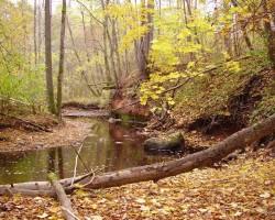 Meži manām acīm - 2. foto