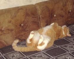 kaķi - 1. foto