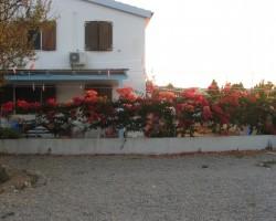 Bugenviļi veido daudzu namu sētu