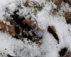 Pavasara cīņa ar ziemu:)
