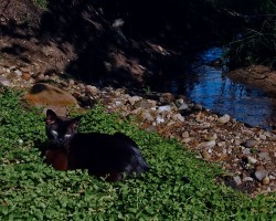 Kika & Kicis - 2. foto
