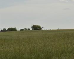 Niedru lija - 2. foto