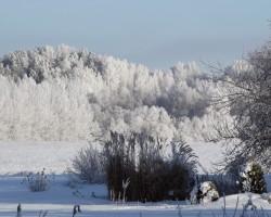 Skaistā ziema