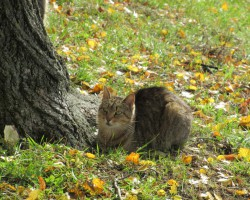 Minka rudenī