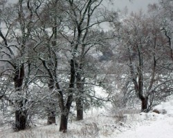 kad ledusziedi atkāpjas, lai ceļu dotu sniega vētrām