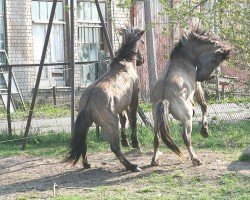 zirgu laiks
