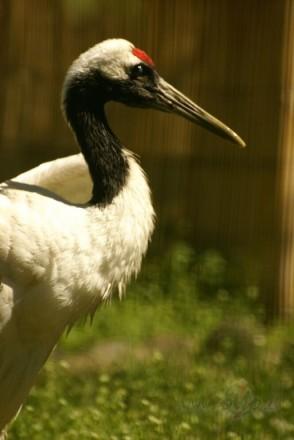 Rigas Zoo 2008