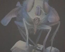 Zinātnieku nakts 2008 - 2. foto