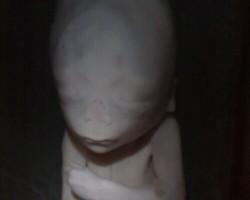 Zinātnieku nakts 2008 - 1. foto