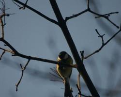 Putni :) - 3. foto