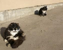 Mani milie kakisi :) - 2. foto