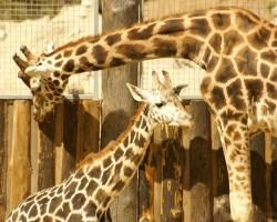 Rigas Zoo 2008 - 1. foto