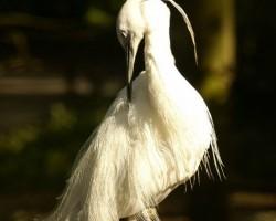 Rigas Zoo 2008 - 3. foto