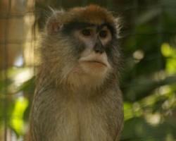 Rigas Zoo 2008 - 2. foto