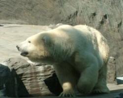 Pragas Zoo - 2. foto