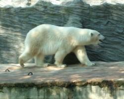 Pragas Zoo - 3. foto