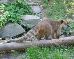 Pragas Zoo - 1. foto