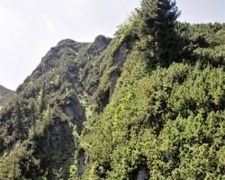 Virs Zakopanes - 3. foto