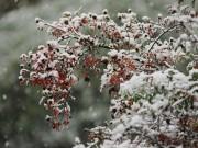 odziņas sniegā