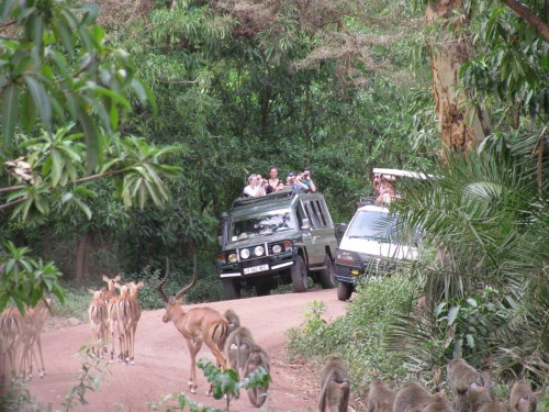 safari (Tanzānija)