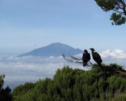 Kilimandžaro un Āfrika - 1. foto