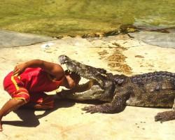 Taizeme_ Krokodiļu ferma - 2. foto