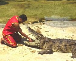 Taizeme_ Krokodiļu ferma - 3. foto