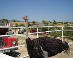 putni,jātniece un Čurkistāna šovasar... - 3. foto