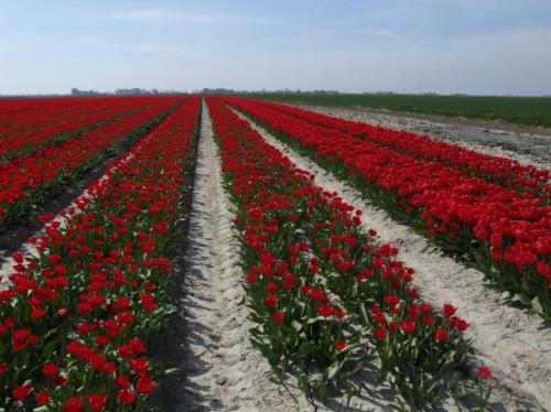 Ziedošā Nīderlande (Nīderlande)
