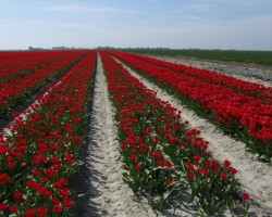 Ziedošā Nīderlande