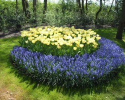 Ziedošā Nīderlande - 1. foto