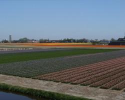 Ziedošā Nīderlande - 3. foto