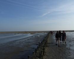 Dubļu pārgājiens (Nīderlande) - 1. foto