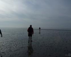 Dubļu pārgājiens (Nīderlande) - 2. foto