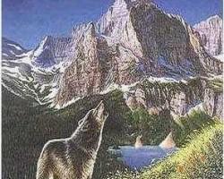cik vilkus redzi...?
