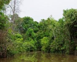 Amazones pieteka :)
