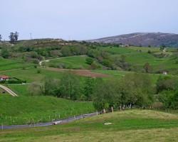 Pavasaris citur - 2. foto