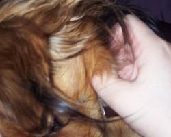 Mani suņi..... - 3. foto