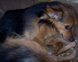 Mani suņi..... - 1. foto