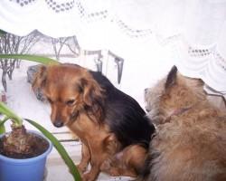 Mani suņi..... - 2. foto
