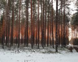 Mežs nekurienē ....