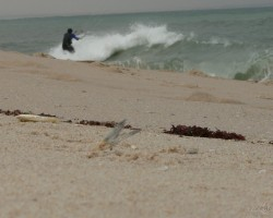 Atlantijas okeāns Rietumsahārā - 2. foto