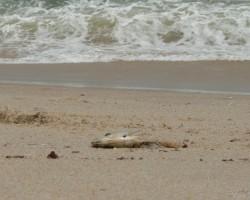 Atlantijas okeāns Rietumsahārā - 1. foto