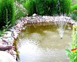 Mans dārzs - 1. foto