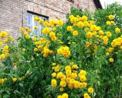 Mans dārzs - 3. foto