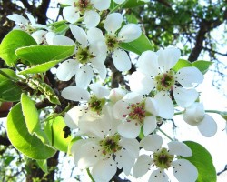 Pavasaris - 2. foto